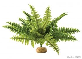 Exo Terra Rainforest Plant Boston Fern Medium РТ-2995